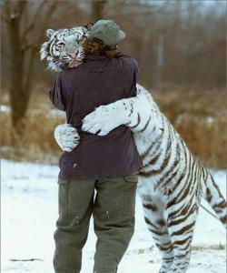 tigre y el cortisol